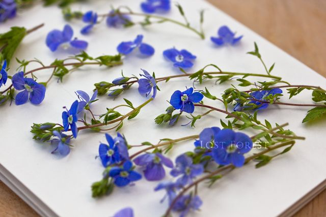 Flower pressing by Lost Forest Jewellery