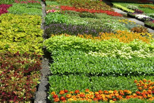 Flowers waiting to be planted at Edwards Gardens