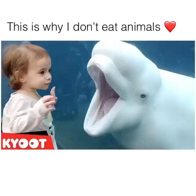 I love animals ❤️❤️