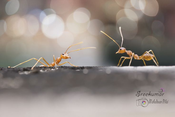 Photograph Gossip by Sreekumar Mahadevan Pillai on 500px
