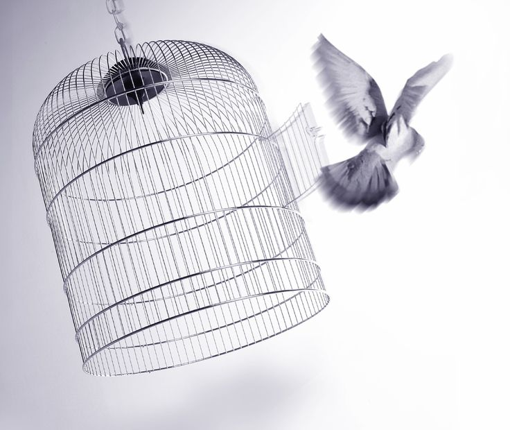 bird out of a cage - Google Search