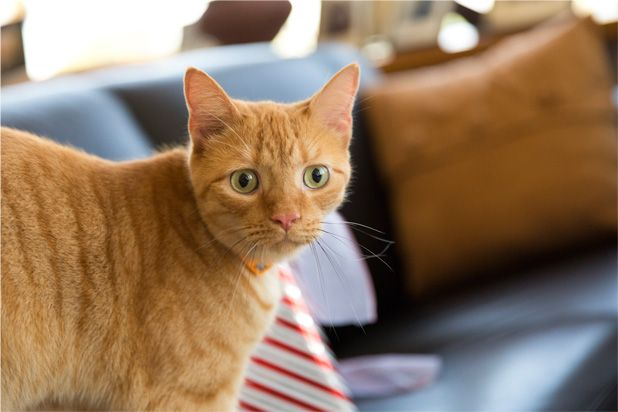 Meet Happy the Cat, a friendly, fuzzy, feline and the Ambassador of Paws-itivity!