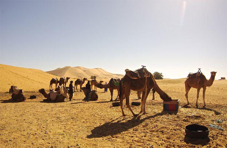 サハラ砂漠 ラクダツアー
