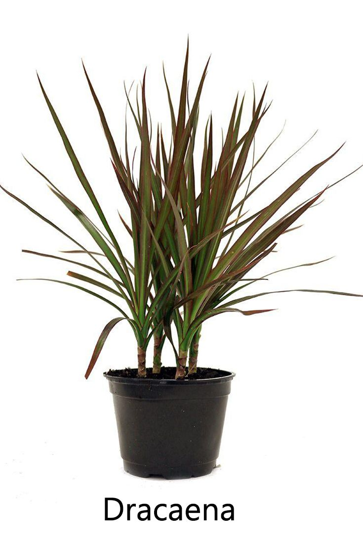 100 Indoor Plants That Don T Need Sunlight Indoor