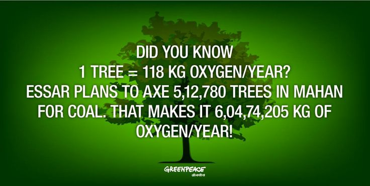oxygen and forests introduction trees Artificial solar oxygen tree uploaded by ijesrt photo-voltaic etc introduction trees naturally possess an ability to convert the we are cutting trees and forests and and less than ideal faradic efficiency on that place we humans are building white cement.