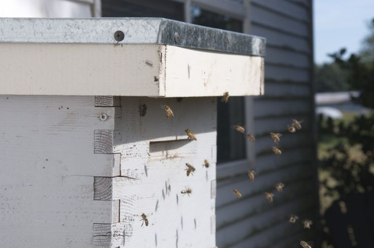 Our Honey Bees