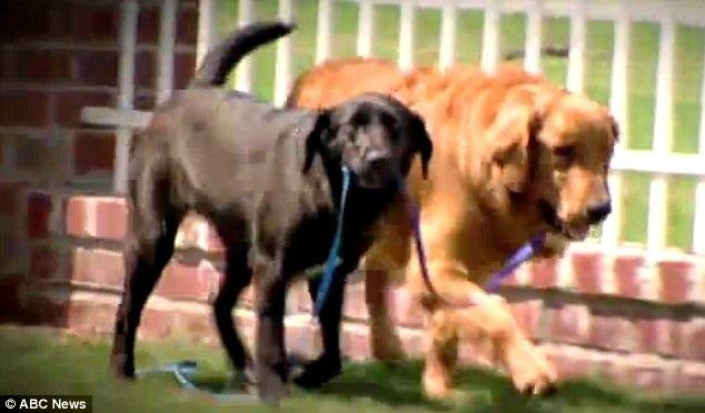 Un perro ciego y epiléptico encuentra ayuda en un perro callejero.