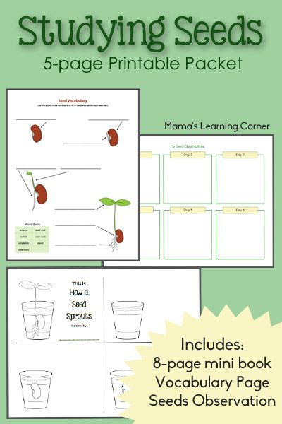 161 best botany for kids images on Pinterest | Activities for ...