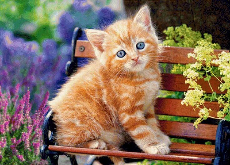 Картинки про кошку в картинках