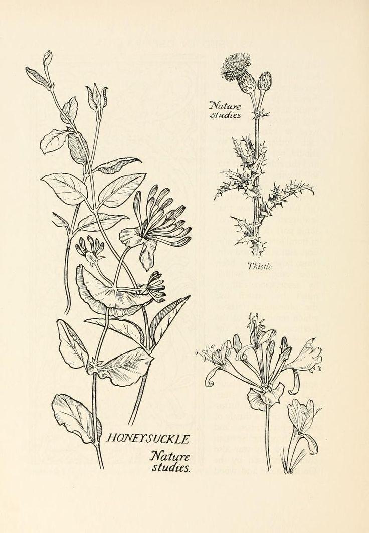 Honeysuckle                                                                                                                                                                                 More
