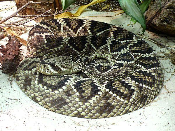 Glass guardò di nuovo il serpente a sonagli che digeriva torpido la sua preda. Spostò la mano dalla gola alla faccia.
