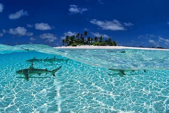 Explore The Beauty Of Caribbean: Crystal-clear Water In The Maldives, Indian Ocean.