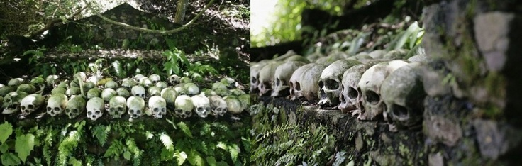The collection of the human skull in the Cemetery village, Kuban, close to Trunyan, Bali. The process of the funeral of the person of dying in this village was not buried, but was placed under the parakeet tree. Unique culture of the Trunyan community.