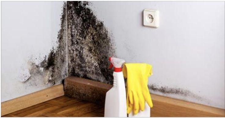 Si anoche te acostaste y de pronto descubriste una mancha de humedad en el techo, no desesperes, porque para esto, hay solución. Sabemos que los hongos y el moho son el terror de los hogares. ¿Quién quiere ver una mancha negra en una pared inmaculada? El moho crece en ambientes cálidos y húmedos en donde …