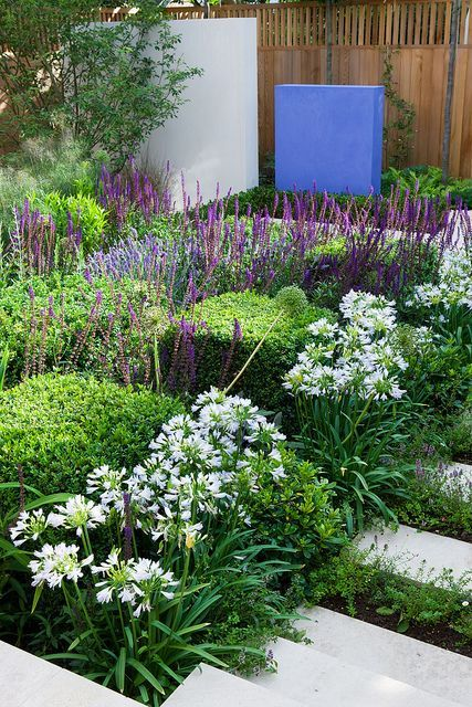 Reflection Garden | White Agapanthus with Salvia and Buxus cubes | Charlotte Rowe Garden Design