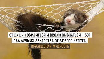 Здоровый сон http://www.doctorate.ru/zdorovyj-son-1-variant/