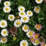 Exceptional Winter Bloomers For Drought Resistant Landscaping in Southern California