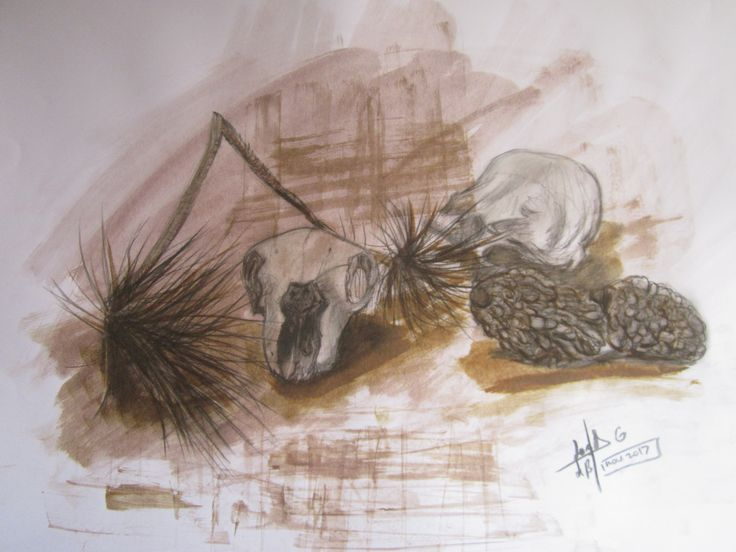 Craneos y pino. Dibujo en técnicas mixtas