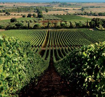 I migliori vini toscani