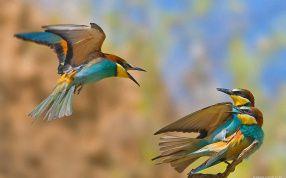 Wallpaper Desktop Background Bird (26)