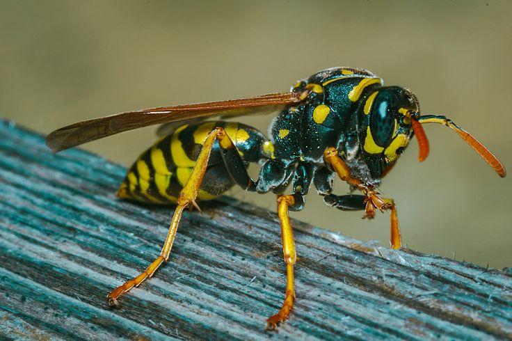 hornet 2 - hornet