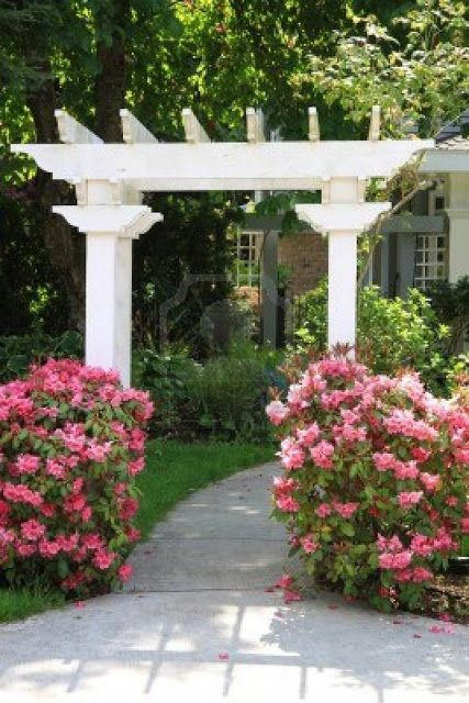 707 best arbor pergola trellis and gazebo images on - Plantas para pergolas ...