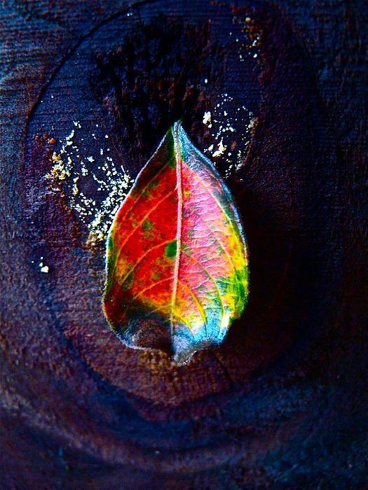 Rainbow Leaf #photography