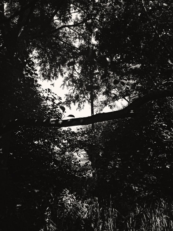 b and w trees.
