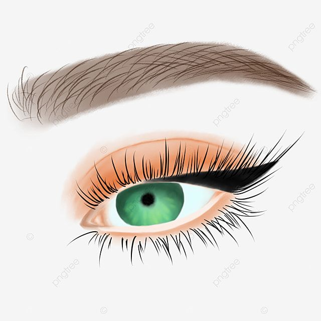 Hand Painted Orange Eye Shadow Eyebrows Eyelashes Eyes Clipart Black And White Eyebrow Eye Shadow Png Transparent Clipart Image And Psd File For Free Downloa In 2021 Eyebrow Shadow Shadow Illustration Shadow