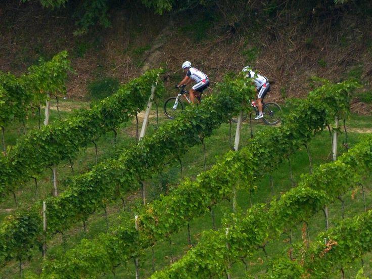 In mountain #bike tra i dolci pendii delle nostre colline #romagna #tenutaneri