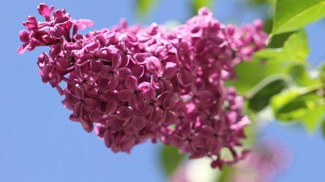 MAGAZÍN - Byl pozdní večer, první máj. A v tento den se, jak je známo, líbáme pod rozkvetlými stromy. Proč ne zrovna pod šeříkem?