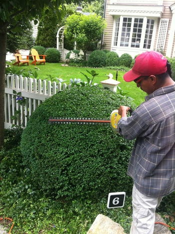 great tip to trimming boxwoods | @Mar Jennings