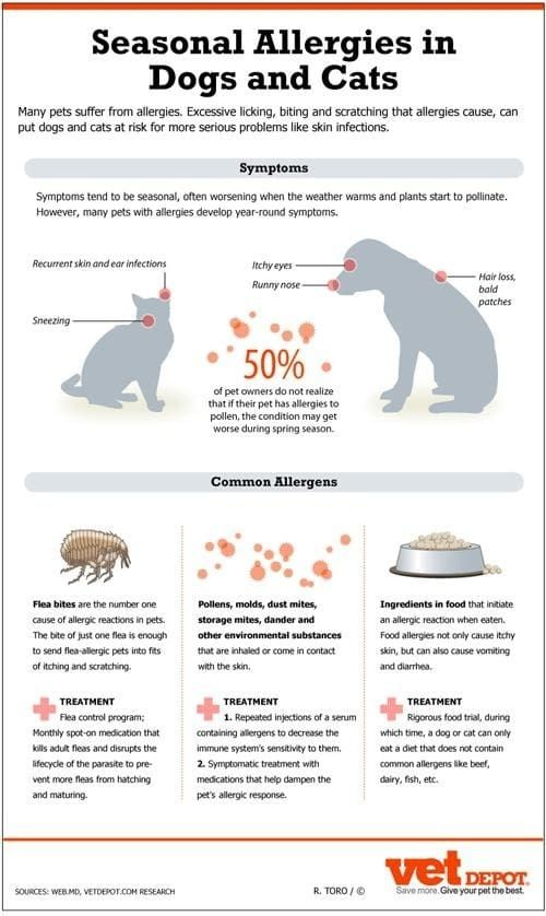 Seasonal Allergies In Cats And Dogs - symptoms, common causes and treatment of pet allergies.