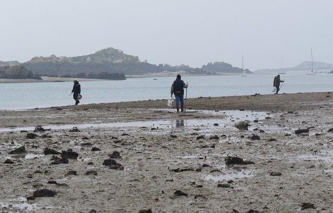 Fishermen walk on the archipelago Chausey March 19, 2015.