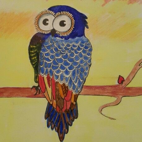 Owl drawing