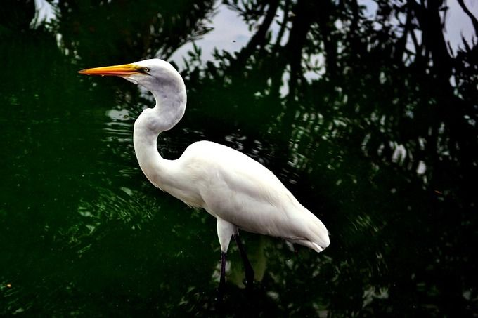 Egret in Amazon by Debb Cabral Photos on @creativemarket