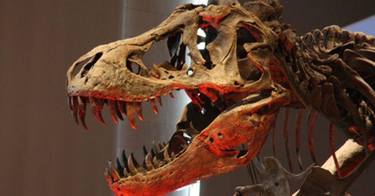 """Las aves prehistóricas predadoras más grandes. Las aves han evolucionado durante millones de años a partir de reptiles de sangre fría, a veces incapaces de volar, a elegantes plumíferos de sangre caliente. Las aves prehistóricas eran feroces depredadores ya sean pequeñas o grandes. Algunas pueden volar y otras, conocidas como las """"aves del terror"""", fueron voladoras. Los huesos fosilizados de ..."""