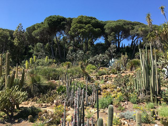 The Marimurtra Botanical Garden is located on the coast of the Costa Brava, perched on top of rocky cliffs in Blanes, in Catalonia, Spain.