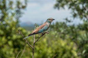 Photographic Safaris Kruger National Park