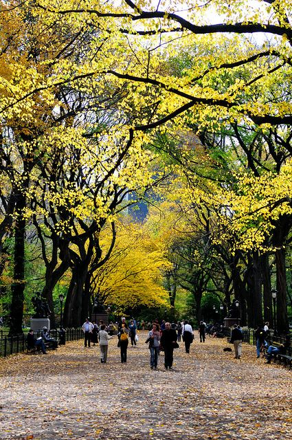Beautiful Central Park in the #Fall, #NYC.
