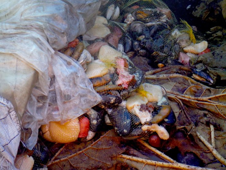Curanto, seafood cooked in the ground on hot rocks