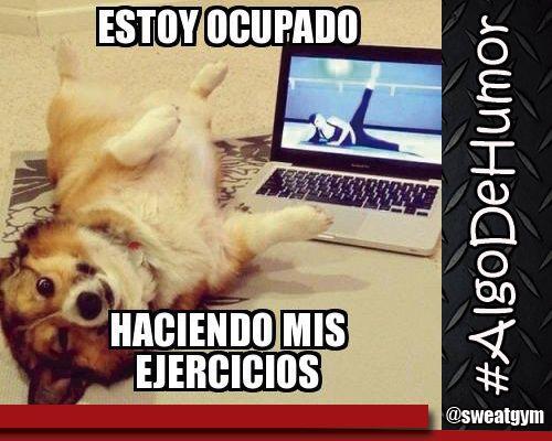 Humor Sweat Gym. #Salud #Nutrición #Cardio #Musculacion #Culturismo #Fitness #Gym #ComeSano #SweatGym #SoySweatGym #TerritorioSweatGym #MrSweat #SweatGymxVenezuela #ejercicio #fisicoculturismo