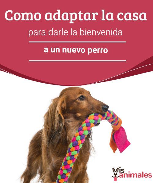 Cómo adaptar la casa para dar la bienvenida a un nuevo perro  ¿Quiere comprar o adoptar un nuevo perro? Aquí encontrará consejos y trucos para hacer que su adaptación a su nuevo hogar sea fácil para dueños y perros