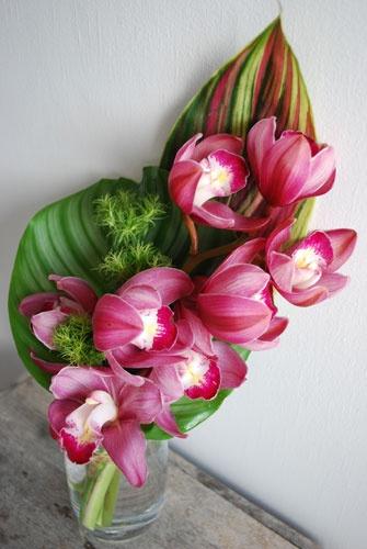 cymbidium orchid :: calathea :: flag :: green trix