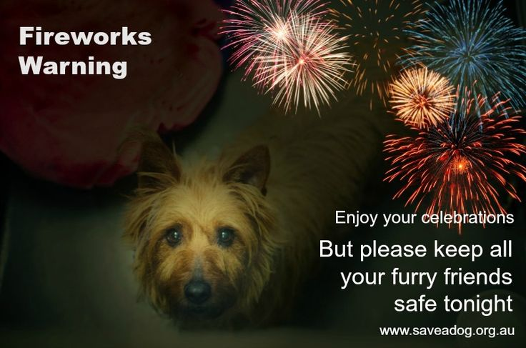 Pets fireworks - Google Search