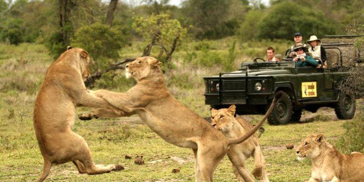 Dél-Afrika, Kruger National parc