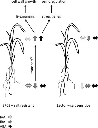 the effect of salt concentration on grass growth essay Effect of salt stress on plant growth and metabolism of bean plant vicia  effect of salt stress on growth,  with the increase of salt concentration,.