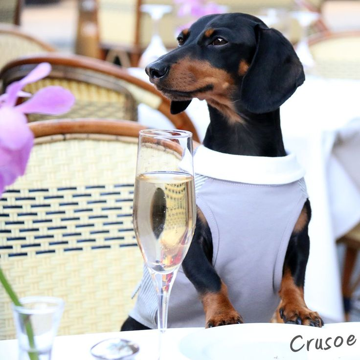 We Chat With Crusoe the Celebrity Dachshund's Human (and ...