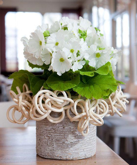 Primula Touch Me 'White'  Deze bijzondere sleutelbloemen (Primula obconica Touch Me Series) hebben uniek gekleurde bloemen die een prachtige uitstraling hebben. Bovendien staat de heldergroene bladkleur zeer fraai bij de mooie sneeuwwitte kleur van de bloemen. Ze bloeien maandenlang en dat van de winter tot in het voorjaar en zijn eenvoudig te verzorgen. Deze prachtige sleutelbloemen zijn dan ook nagenoeg onmisbaar in uw huiskamer.  EUR 6.95  Meer informatie