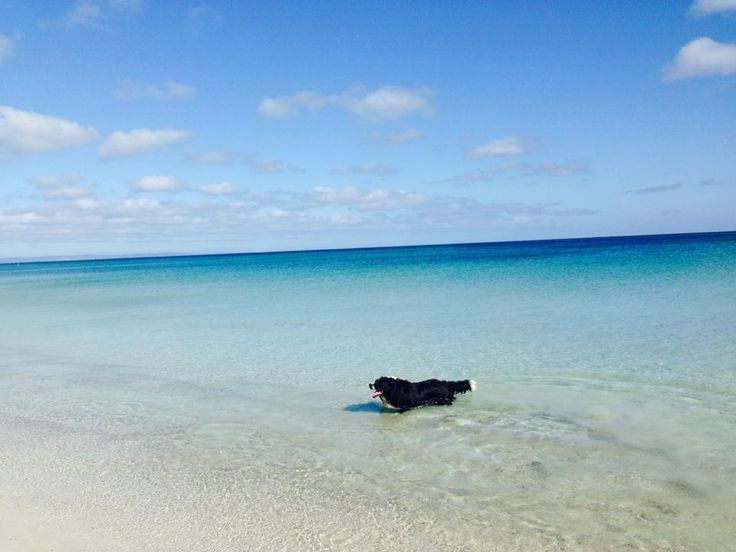 My dog at the beach busselton